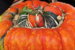 Turks Turban Pumpkin places Stock Images