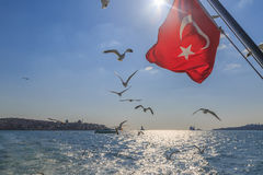 Turkse vlag met vliegende zeemeeuwen op kadikoy achtergrond met gek Royalty-vrije Stock Foto's