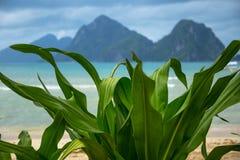 Turkusowy morza i góry tło z tropikalnymi kwiatami opuszcza przedpole w El Nido, Filipiny zdjęcia stock