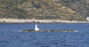 Turkusowy morze zdjęcie royalty free