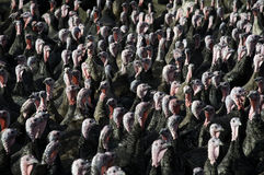 turky的群 库存图片