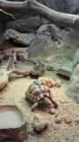 Turltle i en zoo arkivfoto