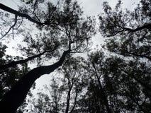 Turm von Bäumen Stockfotografie