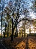Turmberg en otoño imagen de archivo