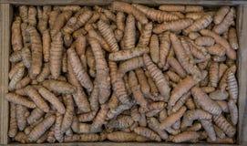 Turmeric korzenie w drewnianym pudełku, fotografującym od above Turmeric jest kulinarnym pikantnością i różnorodność lecznicze wł fotografia stock
