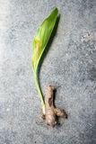 Turmeric, kurkuma z Turmeric, Kurkumowy liść Obraz Stock