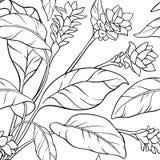 Turmeric seamless pattern. Turmeric plant seamless pattern on white background Stock Photography
