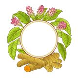 Turmeric plant vector frame. On white backgrond Stock Photography
