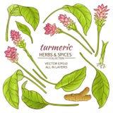 Turmeric elements set. Turmeric plant vector illustration on white background Stock Photos