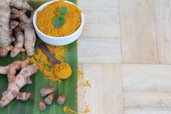 Turmeric powder and fresh root is herb. Royalty Free Stock Photography