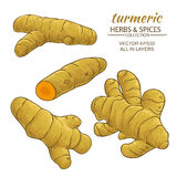 Turmeric roots set. Turmeric roots vector illustration on white background Stock Photography
