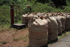 Turmeric stored in sacks. Along with a weighing machine on the side of a road Stock Photo