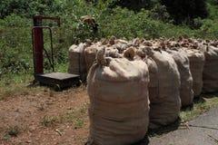 Turmeric stored in sacks Stock Photo