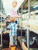Turn back boy with potted flower in his hands looking at his parents working in greenhouse. Bearded man in fedora hat royalty free stock images