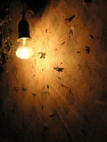 Turned on electric lamp. Evening electric lamp near the wall with night butterfly on Stock Photography