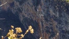 Turnera i Sumideroen Canyonn stock video