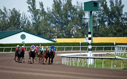 Turning into the Final Stretch. Closely bunched group of racehorses running through the final turn in a claiming race at a south florida race track Stock Images