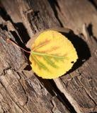 Turning Leaf Stock Photo