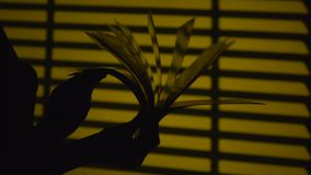 Turning the pages of a book. Silhouette. Slow motion. Close up stock video