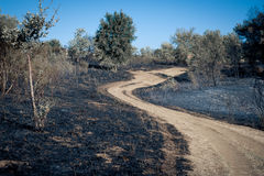 Turning path around scorched earth. Path between burned blackened fields, concept of making scorched earth Stock Photo