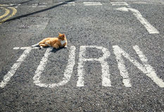 Turning point with cat on the road. A picture of asphalt road with turn sign and laying cat on a sunny day Stock Photo