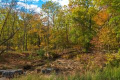 Turning Trees in Autumn Royalty Free Stock Photography