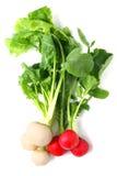 Turnip Royalty Free Stock Image