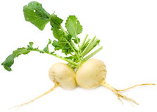 Turnip. With leaves isolated on white Stock Photos