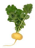 Turnip Royalty Free Stock Photos