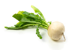 Turnip Royalty Free Stock Image