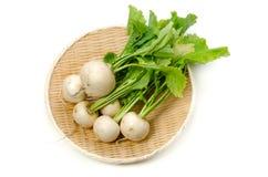 Turnip stock photos