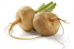 Turnip. Two fresh turnips on the white background Royalty Free Stock Images