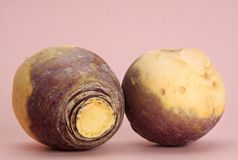 Turnip Stock Images