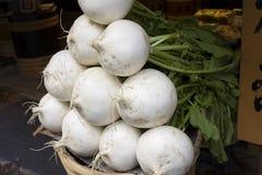 Turnip. Of Kyoto Japan  (Japanese cucumber Royalty Free Stock Photos