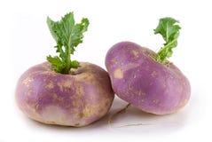 Turnip Stock Photo