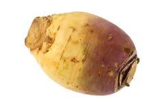 Turnip (Brassica rapa) Stock Image