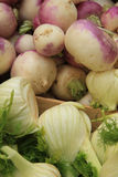 Turnip and fennel Stock Photography