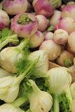 Turnip and fennel Stock Images