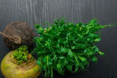 Fresh yellow and black turnip with green pea tendrils. Turnip, green pea tendrils in black wood Stock Photos
