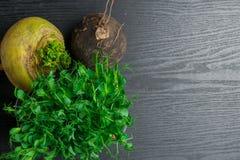 Fresh yellow and black turnip with green pea tendrils. Turnip, green pea tendrils in black wood Royalty Free Stock Photo