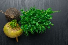 Fresh yellow and black turnip with green pea tendrils. Turnip, green pea tendrils in black wood Royalty Free Stock Photography