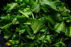 Turnip greens. Fresh turnip greens ready to cook Royalty Free Stock Photo