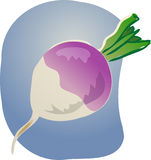Turnip illustration Stock Photo