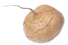 Turnip Isolated Royalty Free Stock Images