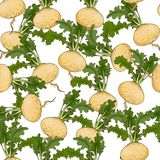 Turnip pattern Royalty Free Stock Photos