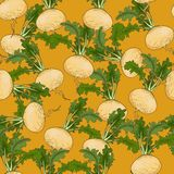 Turnip pattern Stock Photo