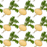 Turnip pattern Stock Photography