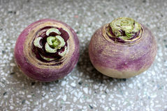Turnip. Purple top , white , Brassica rapa subsp rapa, winter vegetable with tuberous globose root having white flesh Cooked as vegetable royalty free stock images