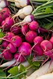 Turnip and radishes. Crimson and white turnips on display with daikon radishes Stock Images