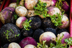 Turnip stand in a store in Bulgaria. Varna Royalty Free Stock Photo